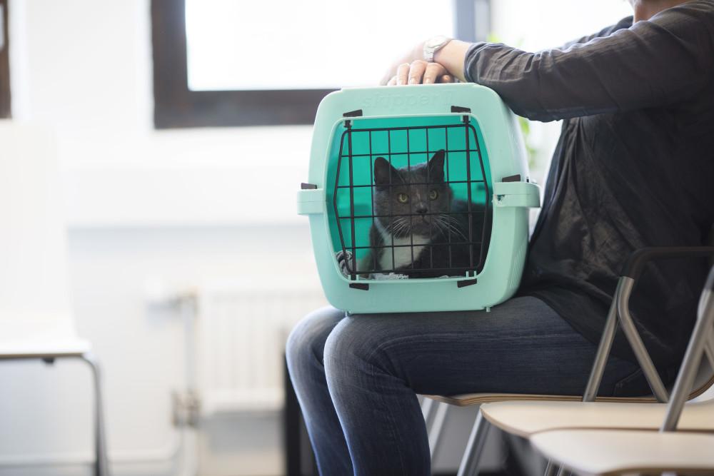 Conseils pour préparer la visite de son chat chez le vétérinaire