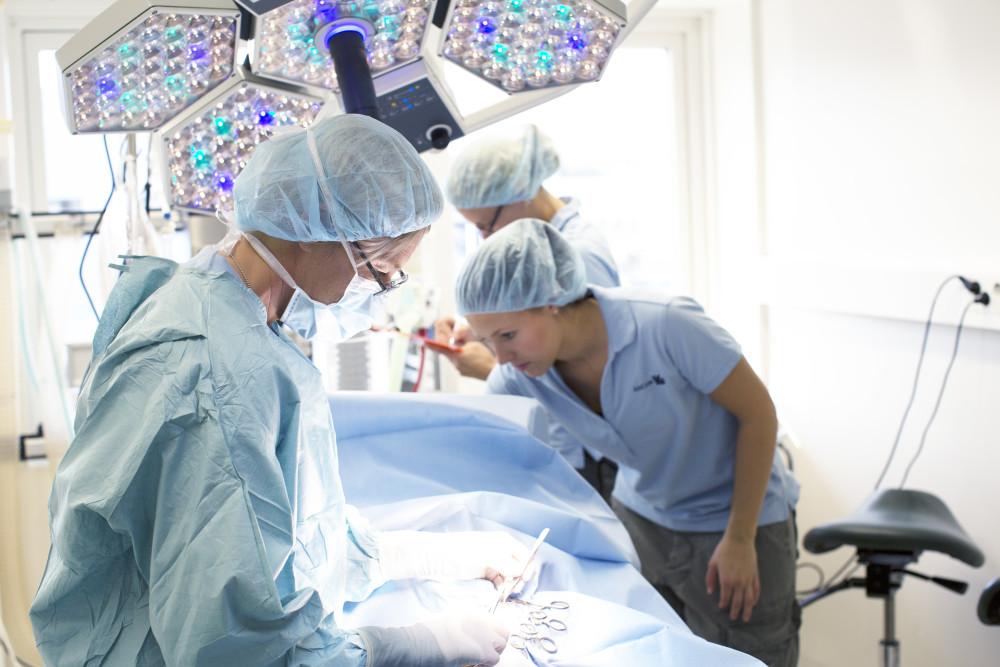 Prestations centre hospitalier vétérinaire Nordvet à La Madeleine près de Lille