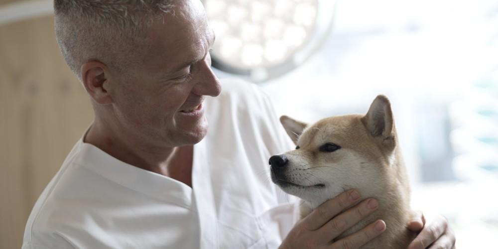 consultation générale à la clinique vétérinaire de villefontaine