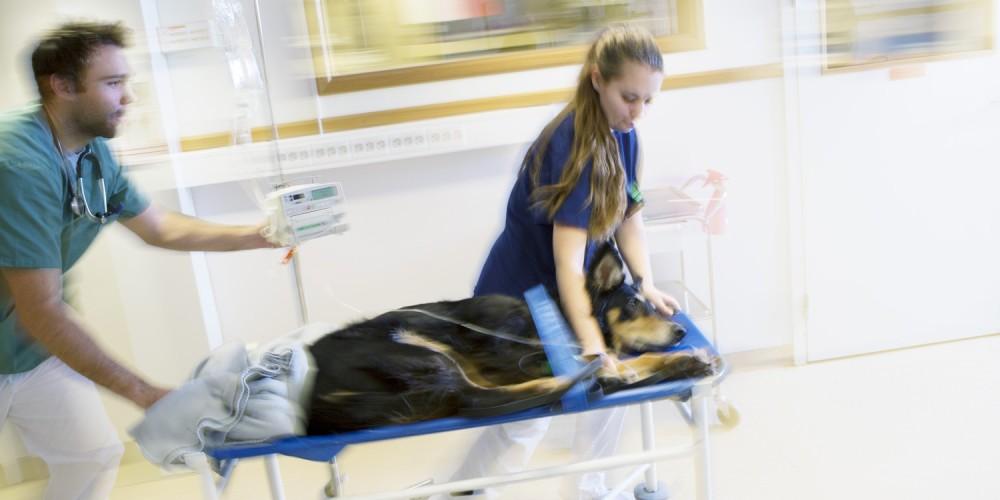 urgence vétérinaire anicura armonia