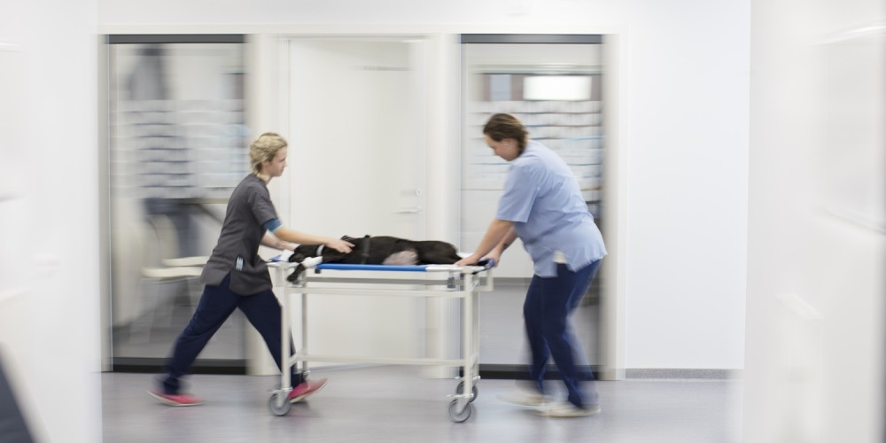 Services de la clinique AniCura Saint Roch de La Rochelle
