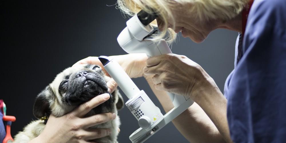 Publications ophtalmologie clinique LorraineVet Ludres près de Nancy