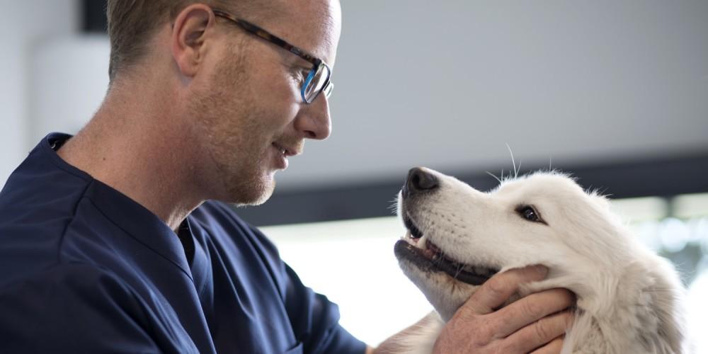 Equipe des vétérinaires de la clinique AniCura LorraineVet