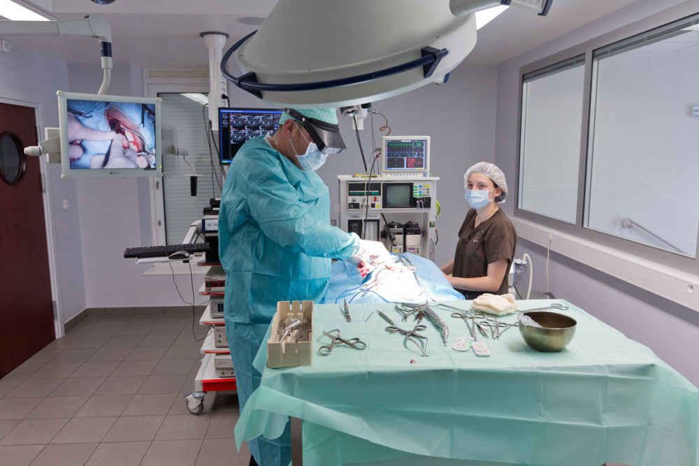 Clinique de référés Zebrasoma à Strasbourg