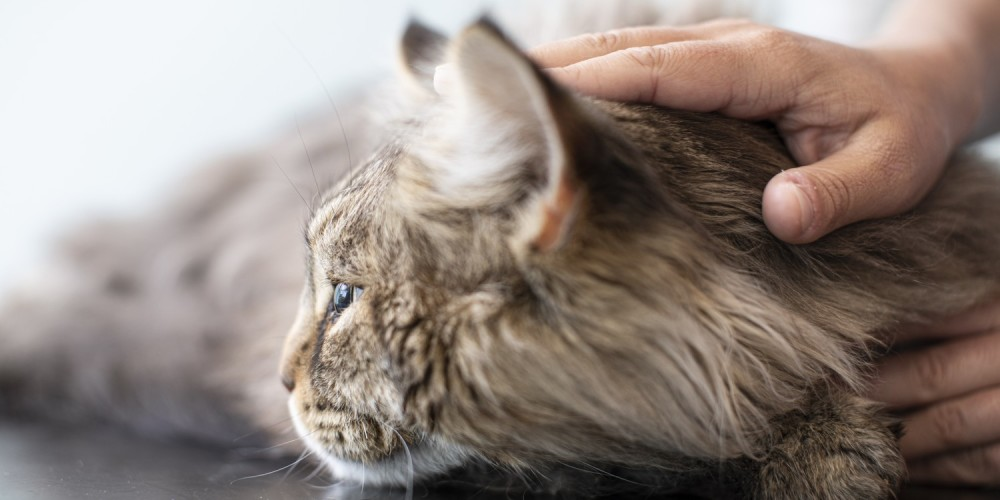 Les modalités thérapeutiques en oncologie vétérinaire