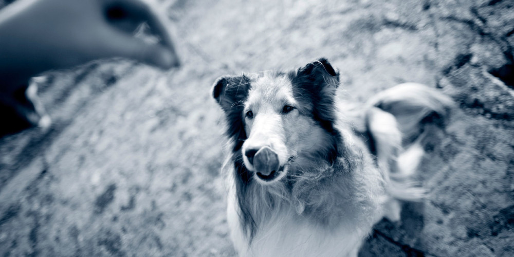 Conseils anesthésie chien