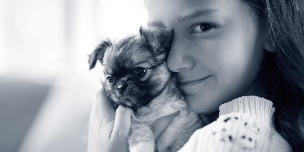 Hernie ombilicale chez le chien