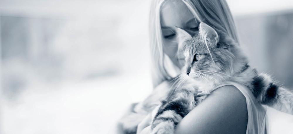 Maladies des voies urinaires chez le chat