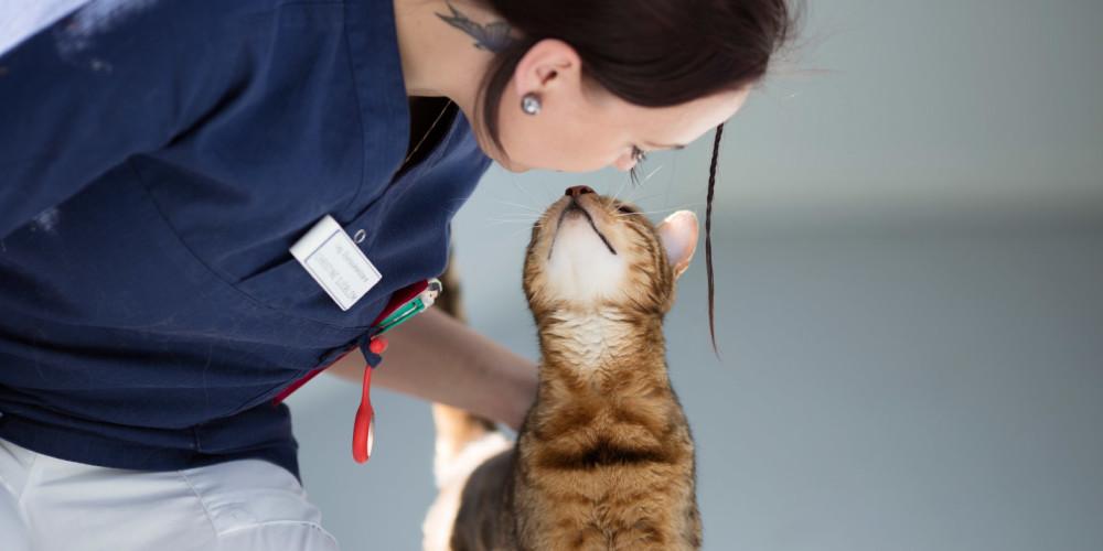 Maladies tumorales chez le chat