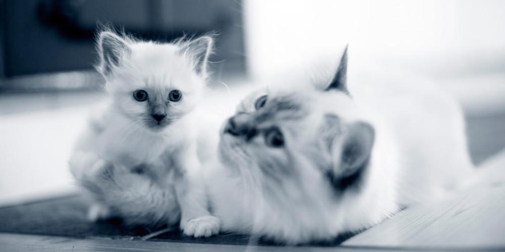 Parasites intestinaux chez le chat