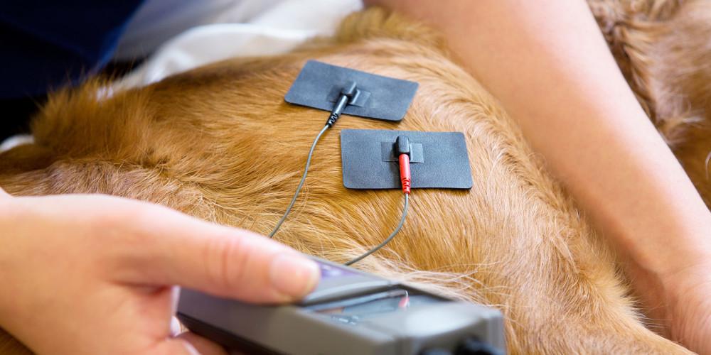 Electrothérapie chien et chat
