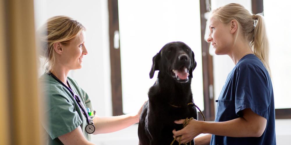 Examen dermatologique vétérinaire