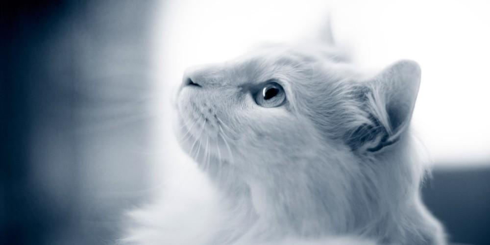 Examen neurologique chez le chien et le chat