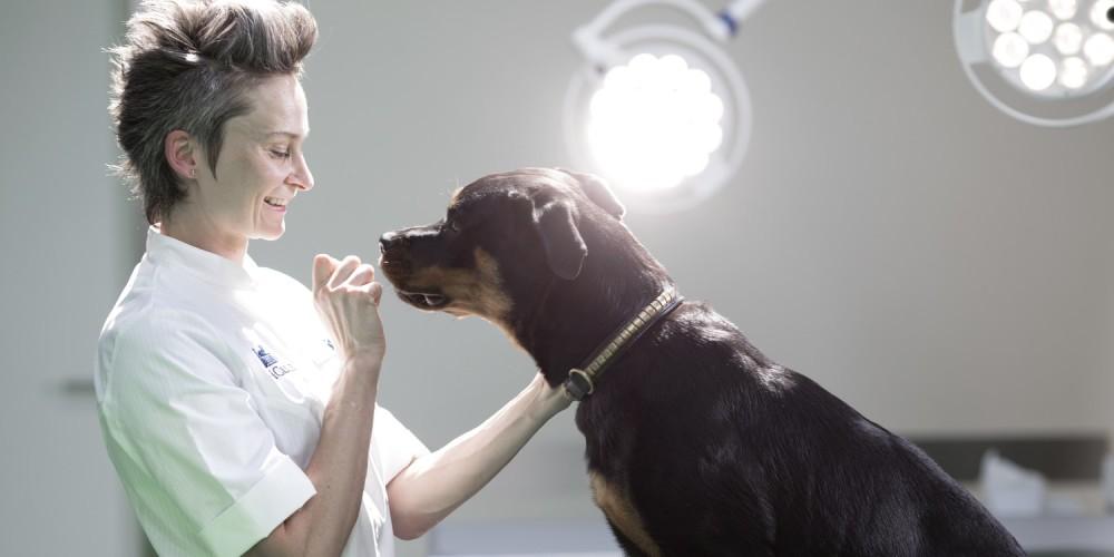 TTA chez le chien opération des ligaments croisés