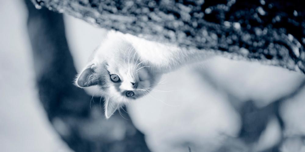 Vermifugation du chat
