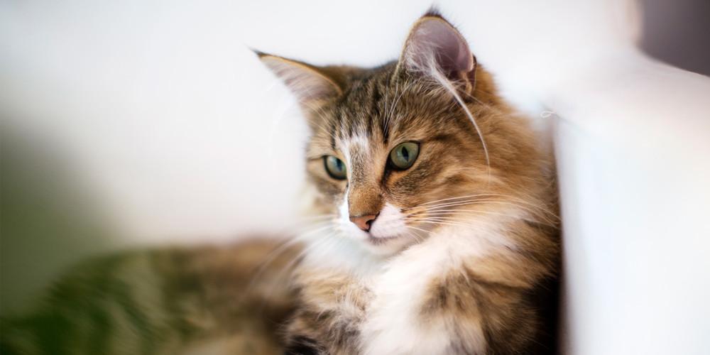 artrose katt