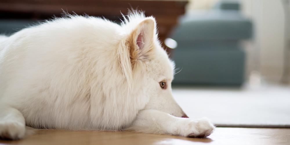 Akut kräkning och diarré hos hund