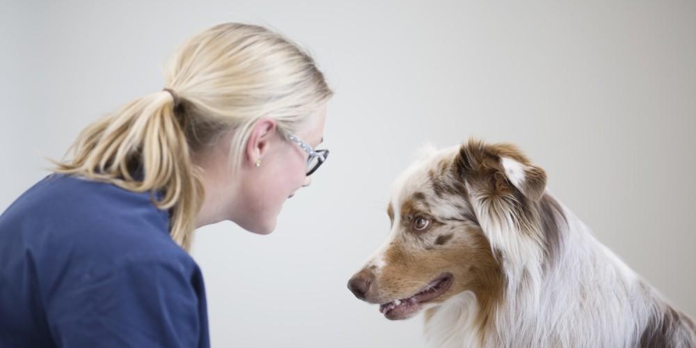 en hund och en sköterska tittar på varandra