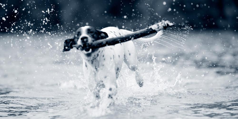 algförgiftning hund