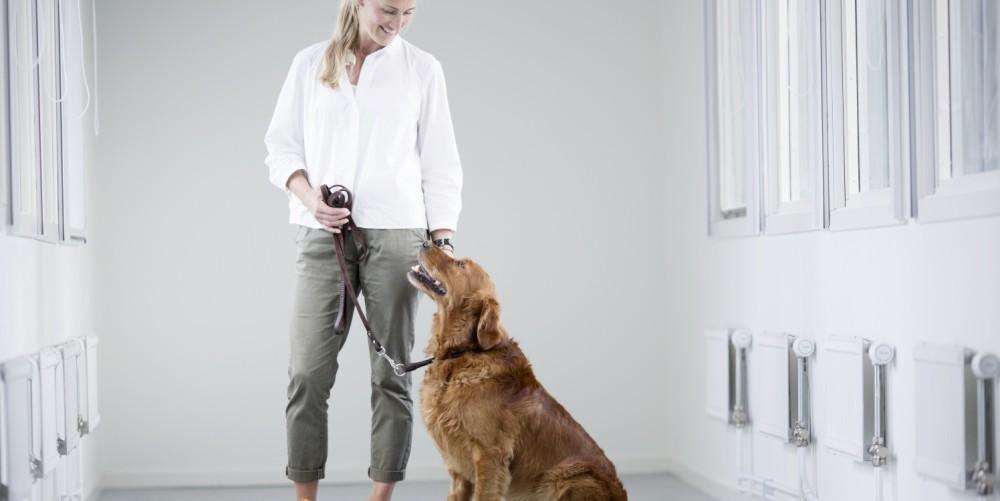 ascesso alla prostata cane