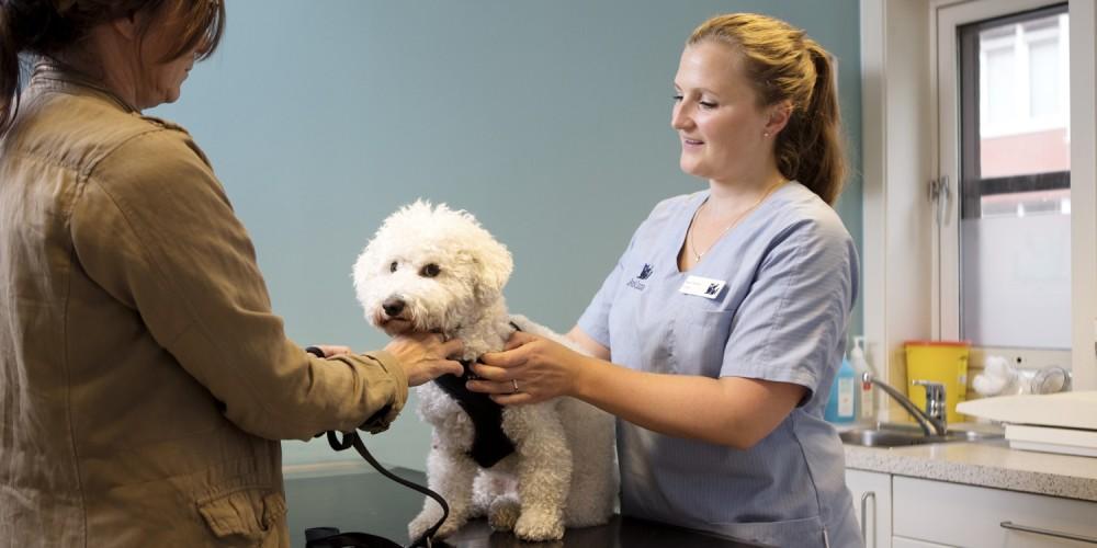 Insuficiencia cardíaca en perros