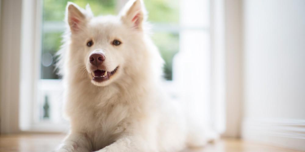 Hund Informationen Tierbesitzer