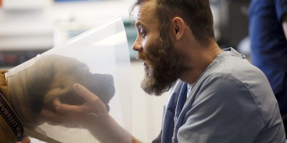 Veterinarios que realizan certificados veterinarios en AniCura