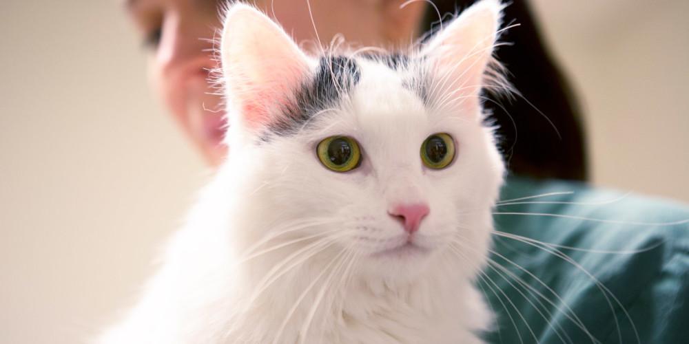 katt med dålig andedräkt