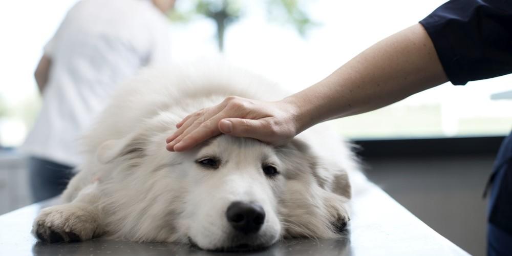 Sygdom hos hund i norge