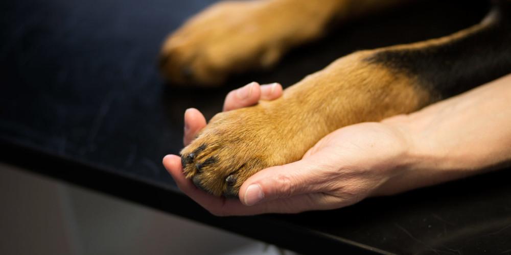 Manuelle Techniken beim Hund