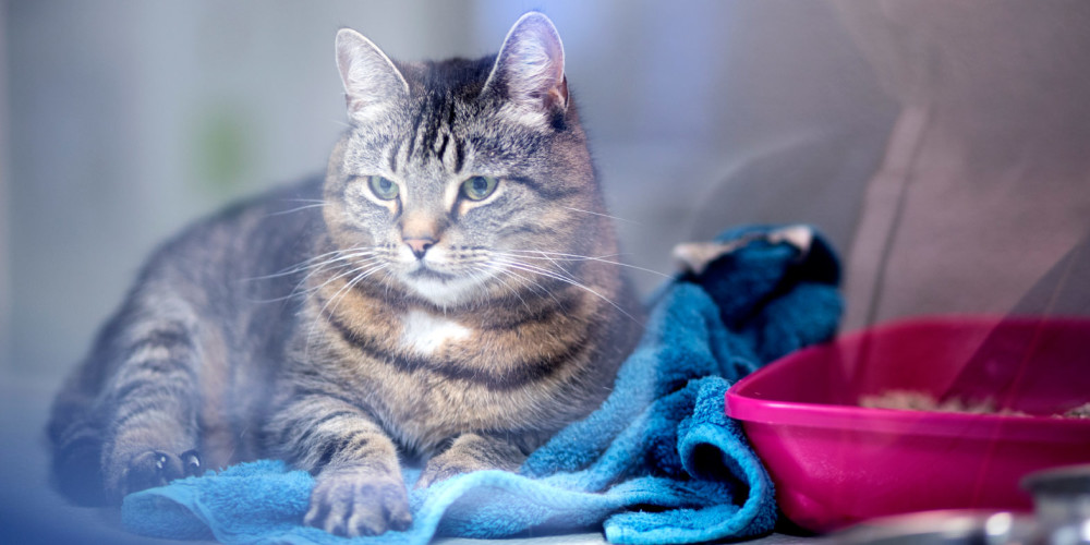 katt ont i magen symptom