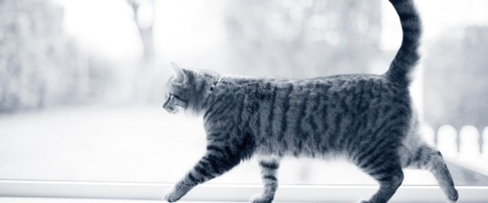 Katze Schuppen