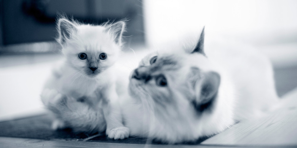 kattunge diarre behandling