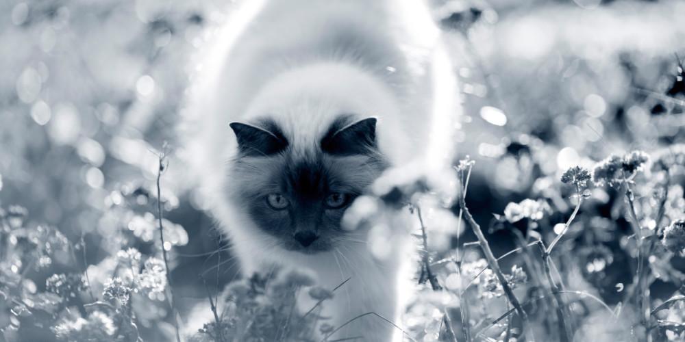 katt med diarre
