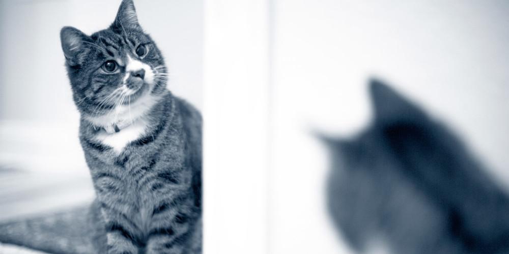 Kippfenster-Syndrom der Katze