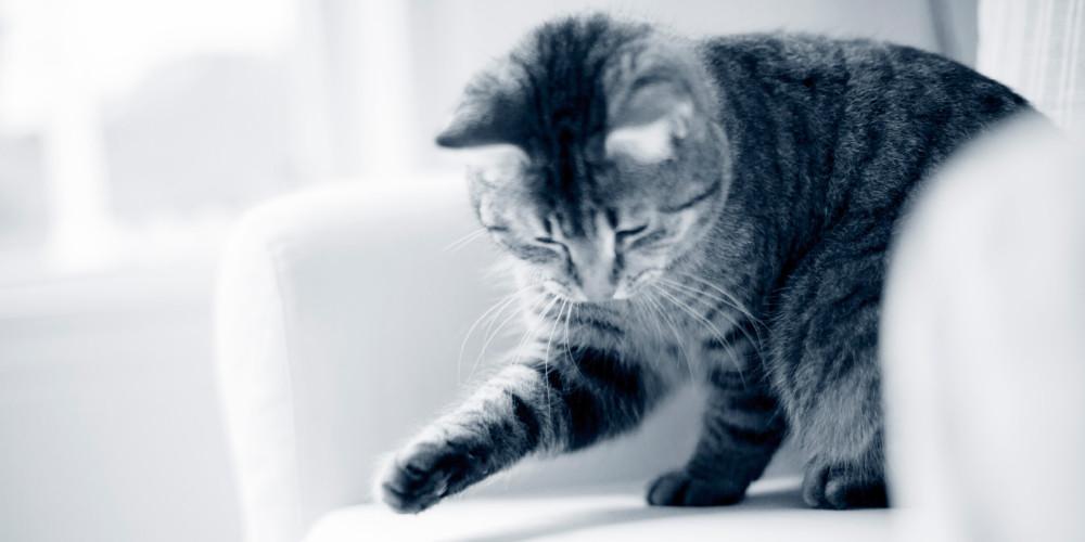 katteadfærd leg kat