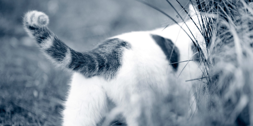 Schmerzen bei der Katze