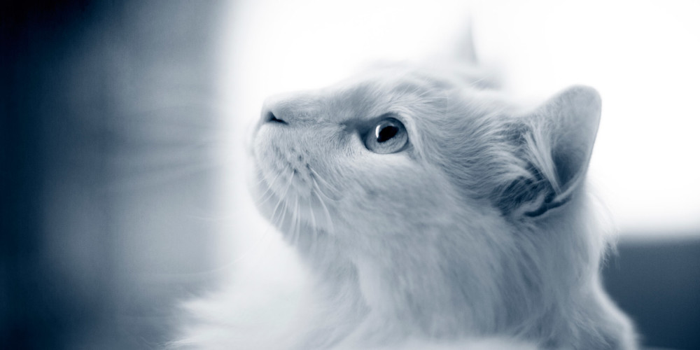 Katzenkrankheiten im Alter