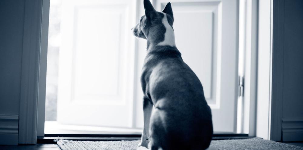 Bäckenfraktur hos hund