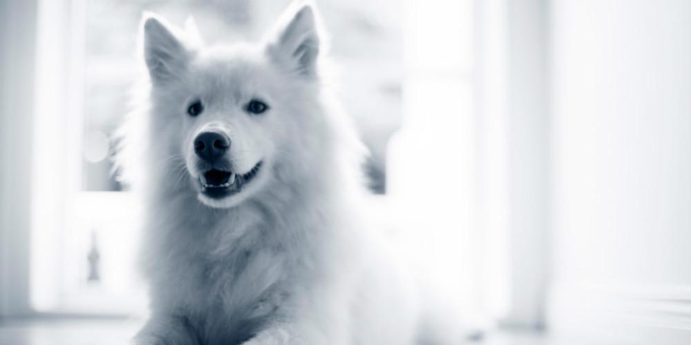 Hund Durchfall Was Sie Sofort Tun Konnen Wann Sie Zum Arzt