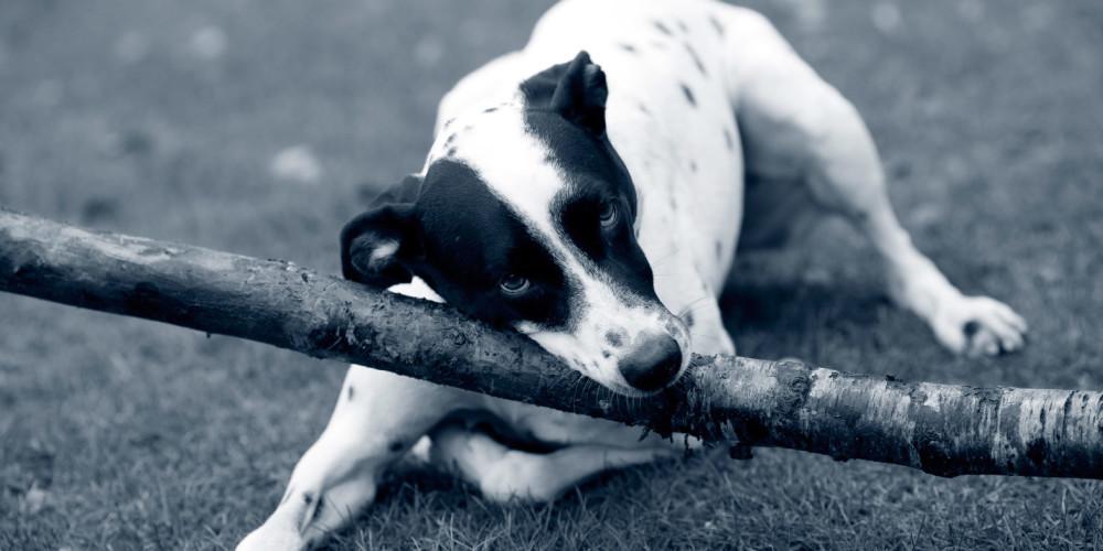 Traumatisierter Hund
