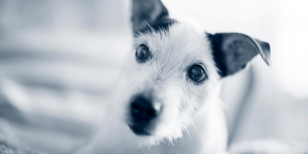 Antibiotikaresistenta tarmbakterier hos hund