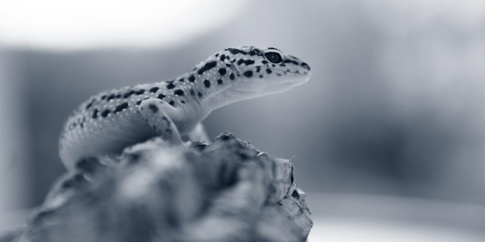 Harnveränderungen bei Reptilien