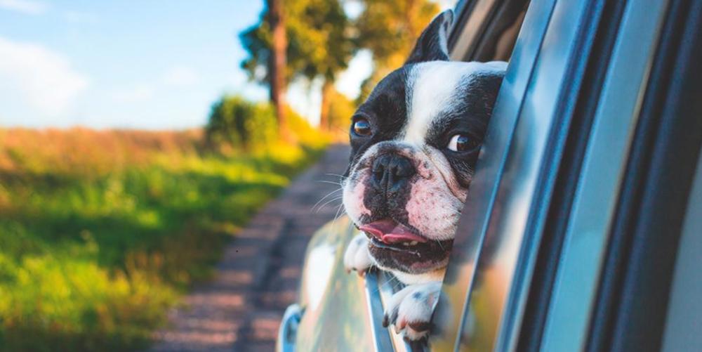 Transportera hund säkert & bekvämt   PetVillage.se