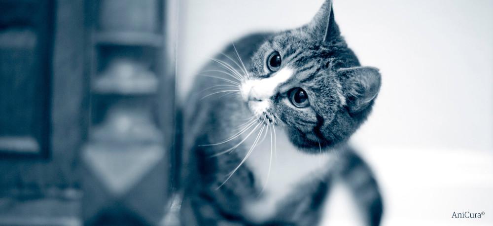 Zähneputzen bei der Katze