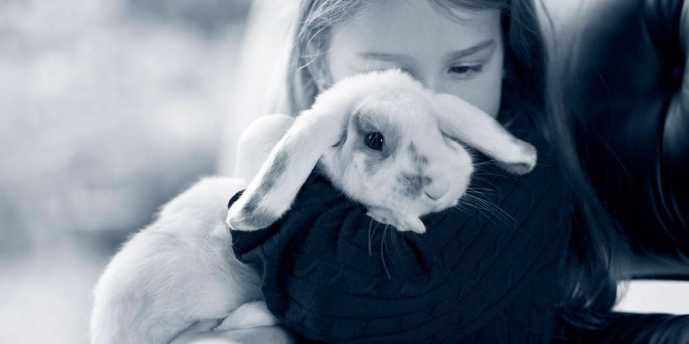 boefje-das-kaninchen