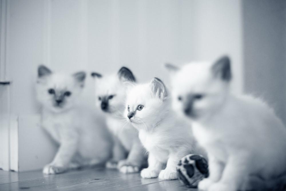 Tos y estornudos en el gato