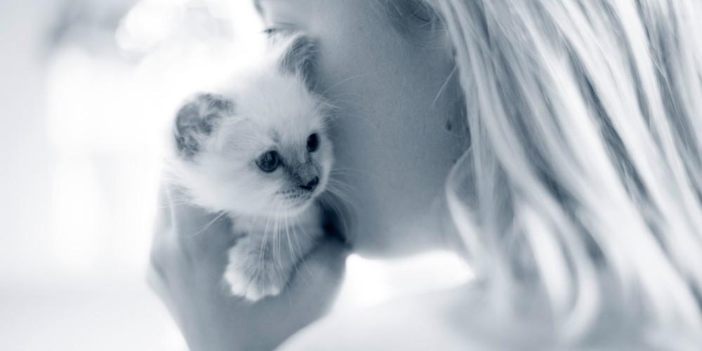 Katze zuckt