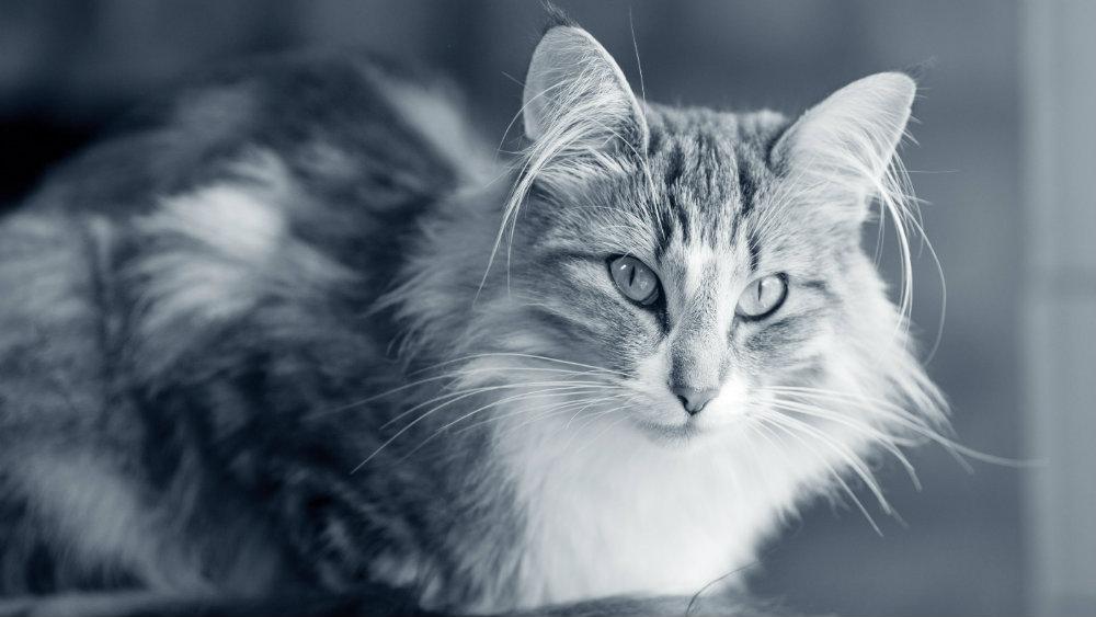 Homöopathie Katze