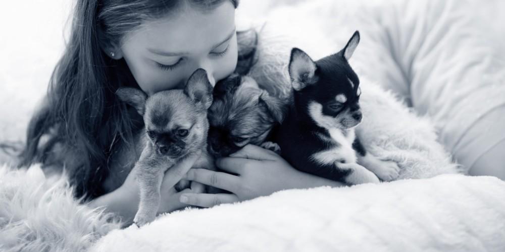 problemas respiratorios perros